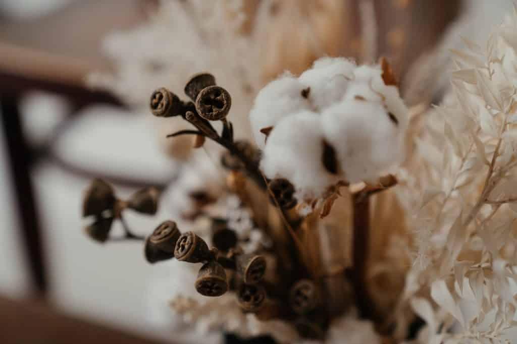 Cotoon flower